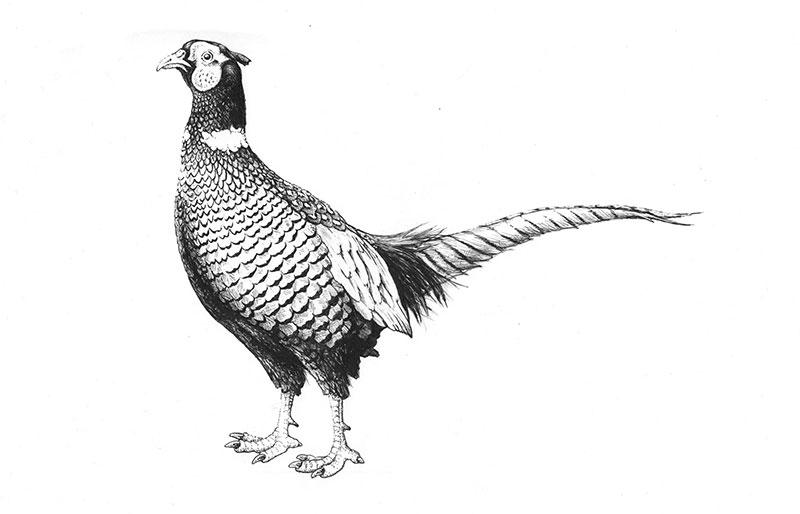 Illustrationen vom Tier